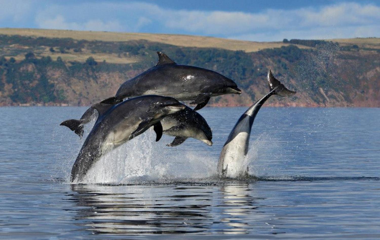 Wilde Delfine 2017 - Eins von vielen gemeinnützigen Projekten @sparda-vereint.de
